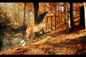 Arrival of Autumn by DarkHorses90