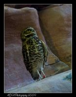 Owl by artisticallylearning