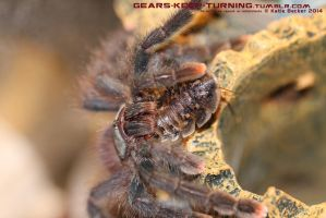 A. avic eating by Dachindae