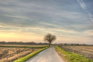 Lonely Tree by Erf-0