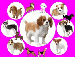 my 7 favorite kinds of dogs by AngeliLPS