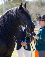 STOCK - Canungra Show 2012 155 by fillyrox