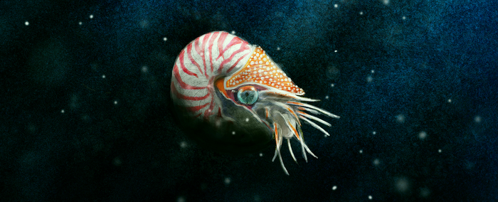 Nautilus by Foxeus