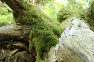 Mossy log Stock 11 by Malleni-Stock