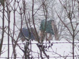 Sad Horses in the Snow by cowgirlscholar