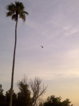 Palm Tree/Seagull by GorgeousNightmare94