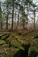 Cracked Moss Covered Rocks by RuralCrossroads360