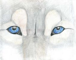The Eyes of the Wolf by Hatters-Workshop
