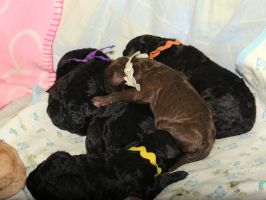Puppy Pile by Synthemum