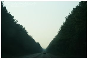 Valley of Trees by TheDarkRoom-Photo