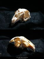 Bird Skulls Stock 1 by emothic-stock