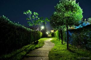 Dreamy garden at night by colorain