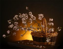 Spring Blooms in a Basket by toadfoto-stock