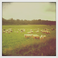 Sheeps by Beccis1995