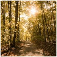 Sunday Drive by DennisChunga