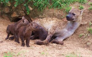Hyena family by silver-brush-stroke