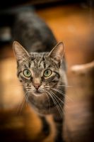 My lovely cat by Kelshray-photo