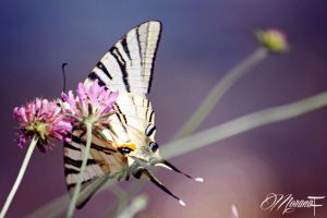 Butterfly by moranaF