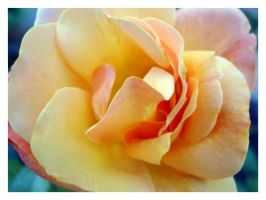 Yellow rose by shadow-kat-ana