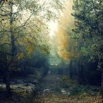 Autumn feelings no.19 by landscapesaxony