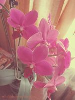 Orchid in a pot by Schuldih