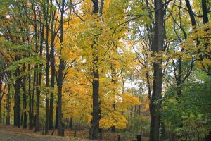 Yellow And Green by raistlin306