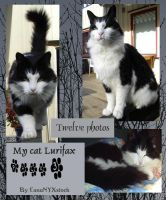 My cat Lurifax, pack 03 by LunaNYXstock