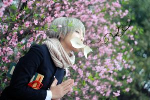 Natsume Yujin Cho_breath the spring by Dan-Gyokuei