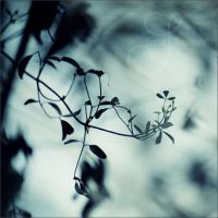 twigs by prismes