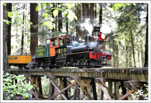 Steam in the woods by NitzkaPhotography