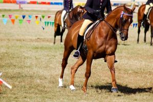 Show chstnt cantr frnt on ride by Chunga-Stock