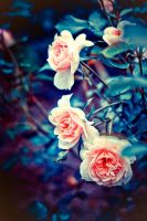 roses... by BaxiaArt