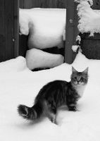 Tabasco in the snow by LadyLazarus28