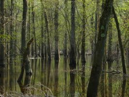 Flooded Wood, Passaic River by MadHazered