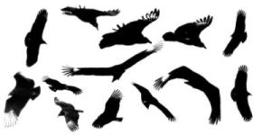 Bird Brushes by hbjphotography