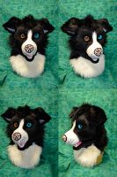 Border Collie Head by temperance