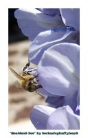 Resident Bee by technologicallyinept