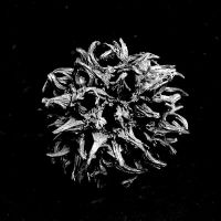 Black and White Plant by parablev
