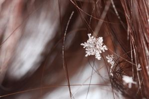Crystalline by froggynaan