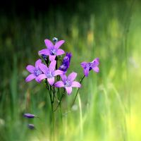 Bells in the meadow by dsfotods