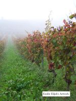 Foggy Vineyards by EmilieElijah by EmilieElijah