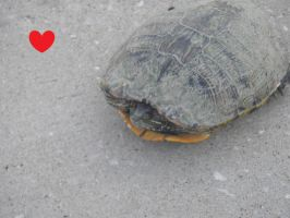 I love you lonley turtle by kayebear