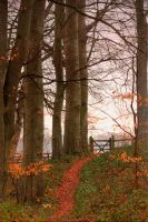 beech path and gate by knapb