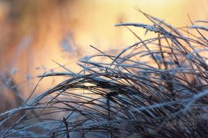 Morning Frost by JoniNiemela