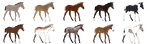 Foal Design Sale : 5/10 Available by JValdis