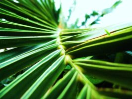 Palm leaf by axelka2
