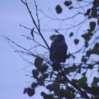 Nevermore by Lintu79
