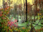 Pea Soup Swamp by Intergrativeone