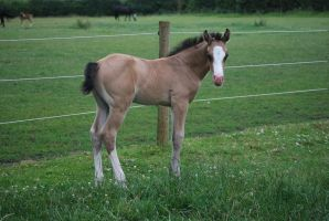 Foal Stock 8 by equinestudios