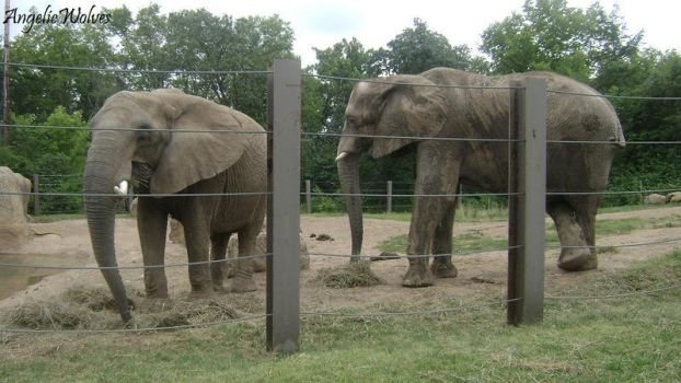 Elephants Chillin by AngelicWolves